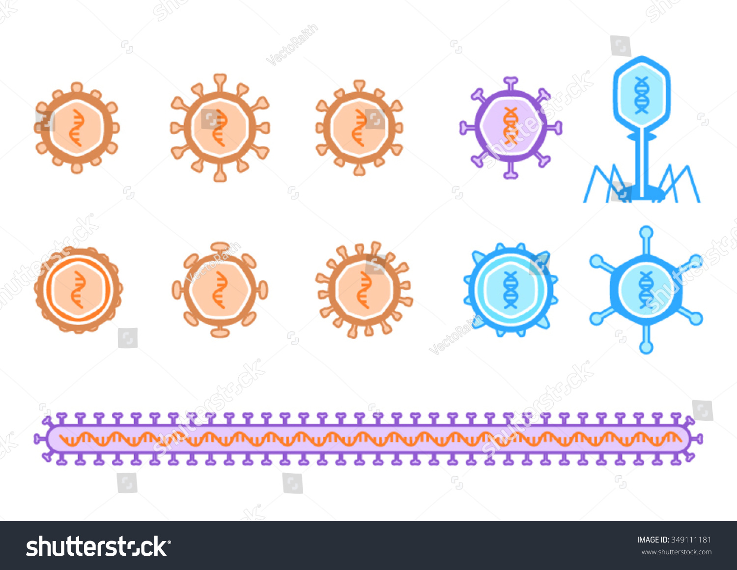 basic virus diagram honeywell thermostat tahoma simple viruses describing rna dna stock vector royalty free and including bacteriophage is orange