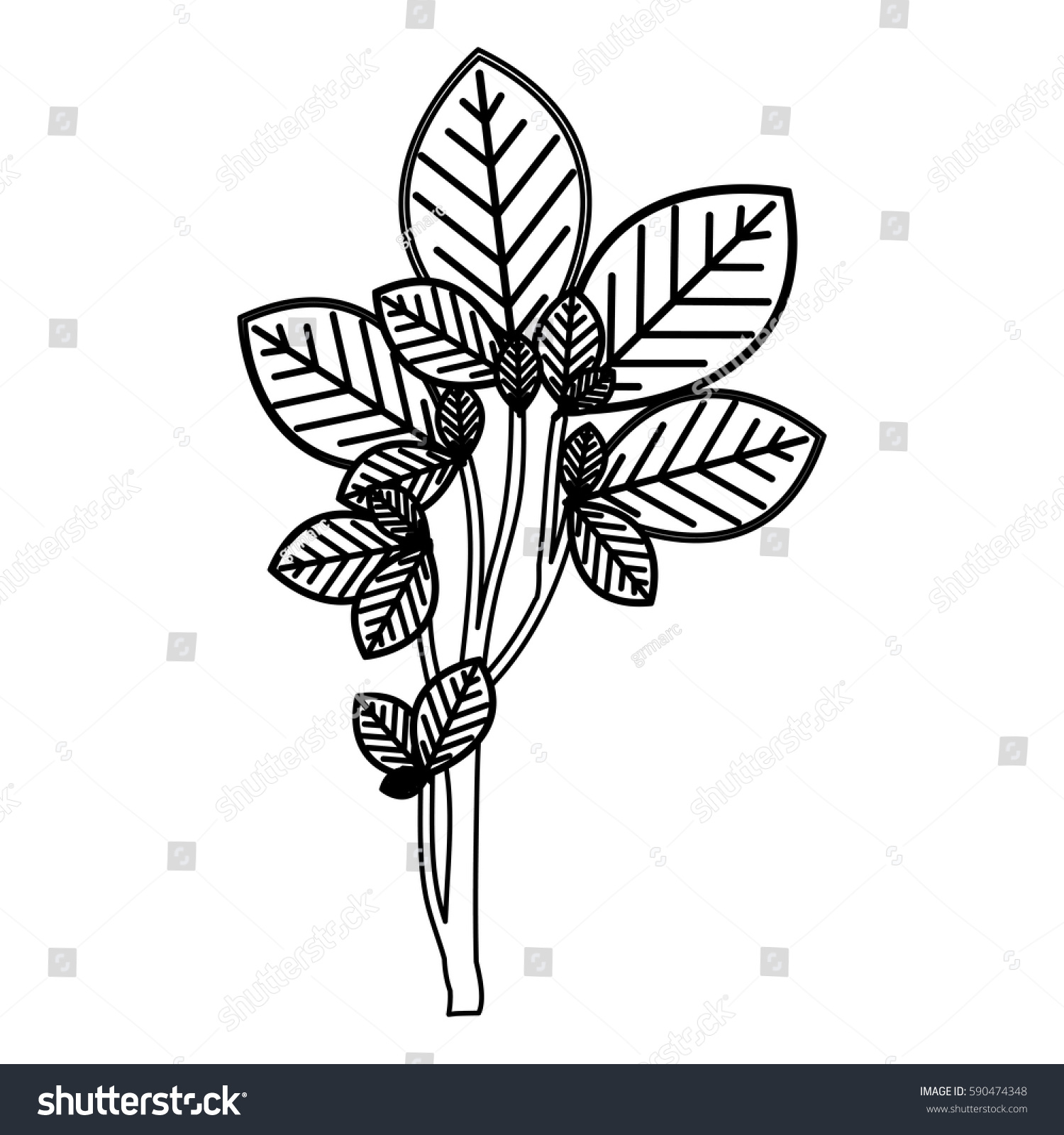Sketch Silhouette Ramifications Oval Leaves Nature Stock Vector 590474348 - Shutterstock