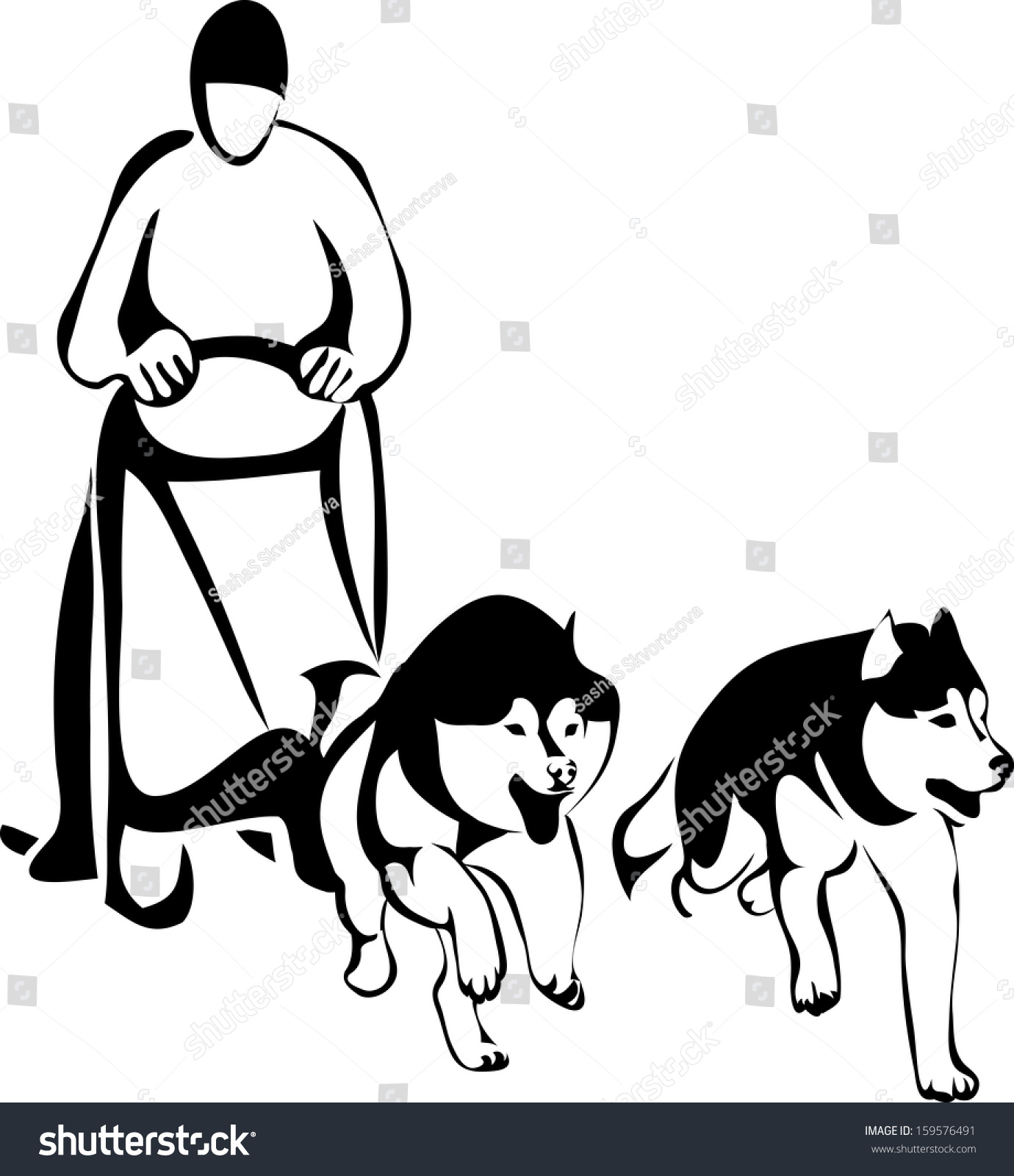 hight resolution of sled racing dogs from two siberian huskies