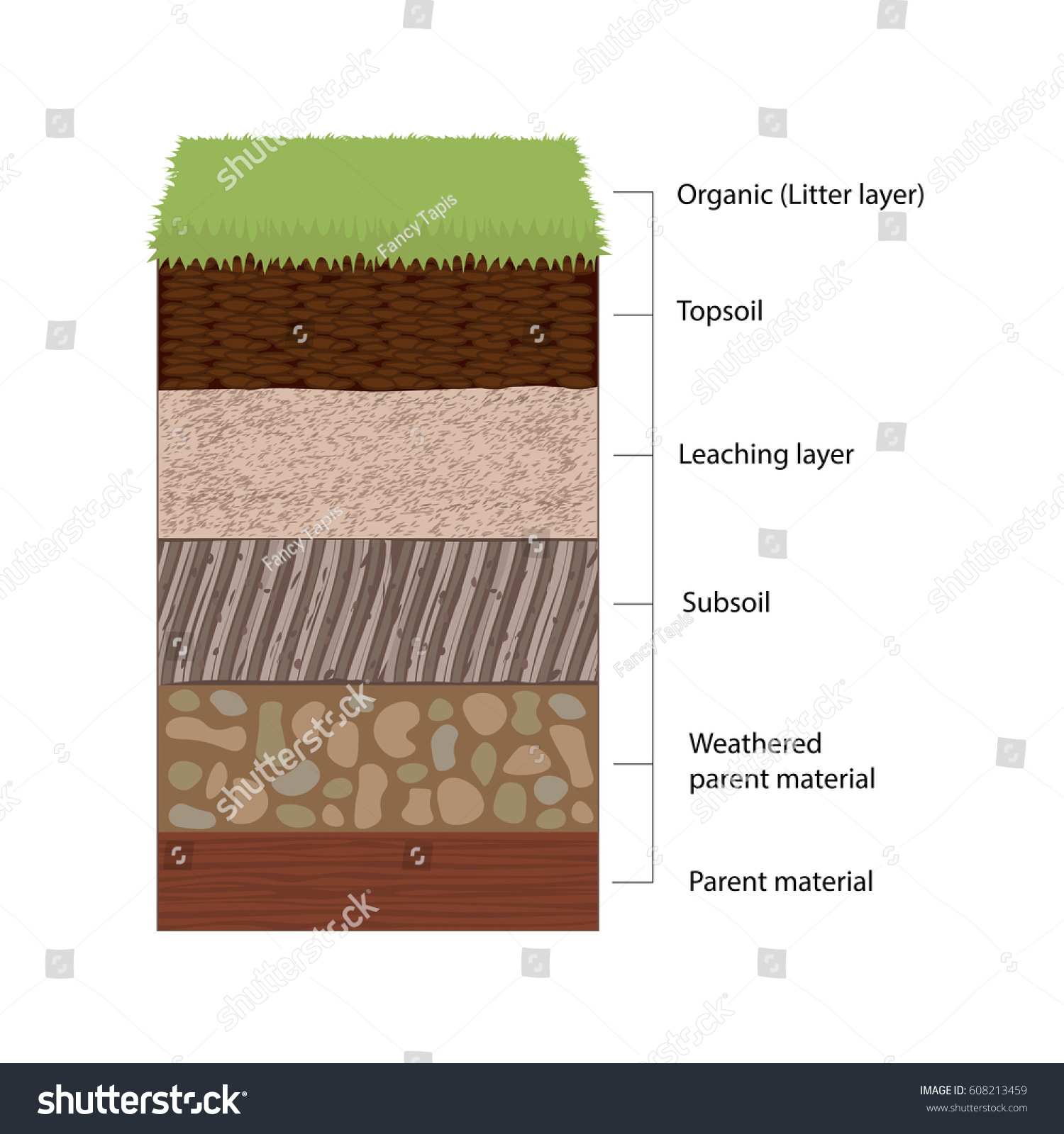 Soil Horizons Distinct Layers Soil Vector Stock Vector