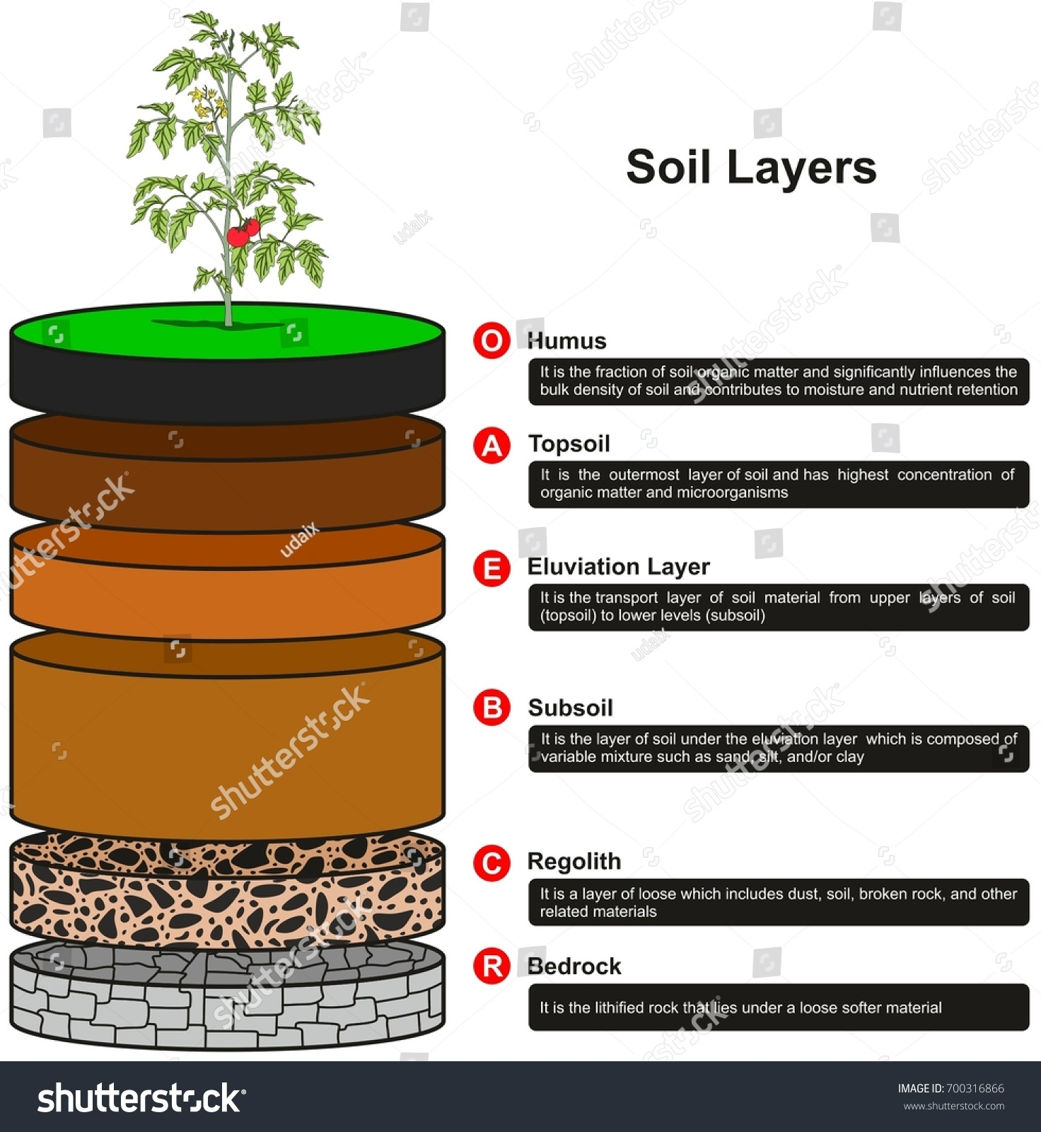 soil layers diagram science water cycle answers infographic showing slices stock
