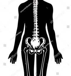 spine pelvis icon vector [ 1125 x 1600 Pixel ]