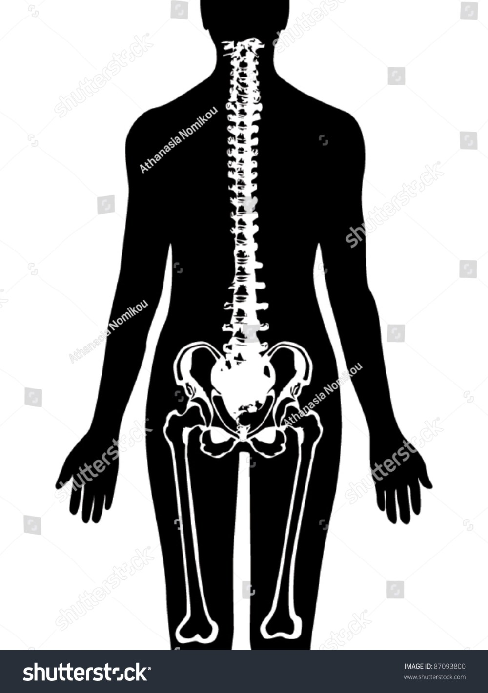 medium resolution of spine pelvis icon vector