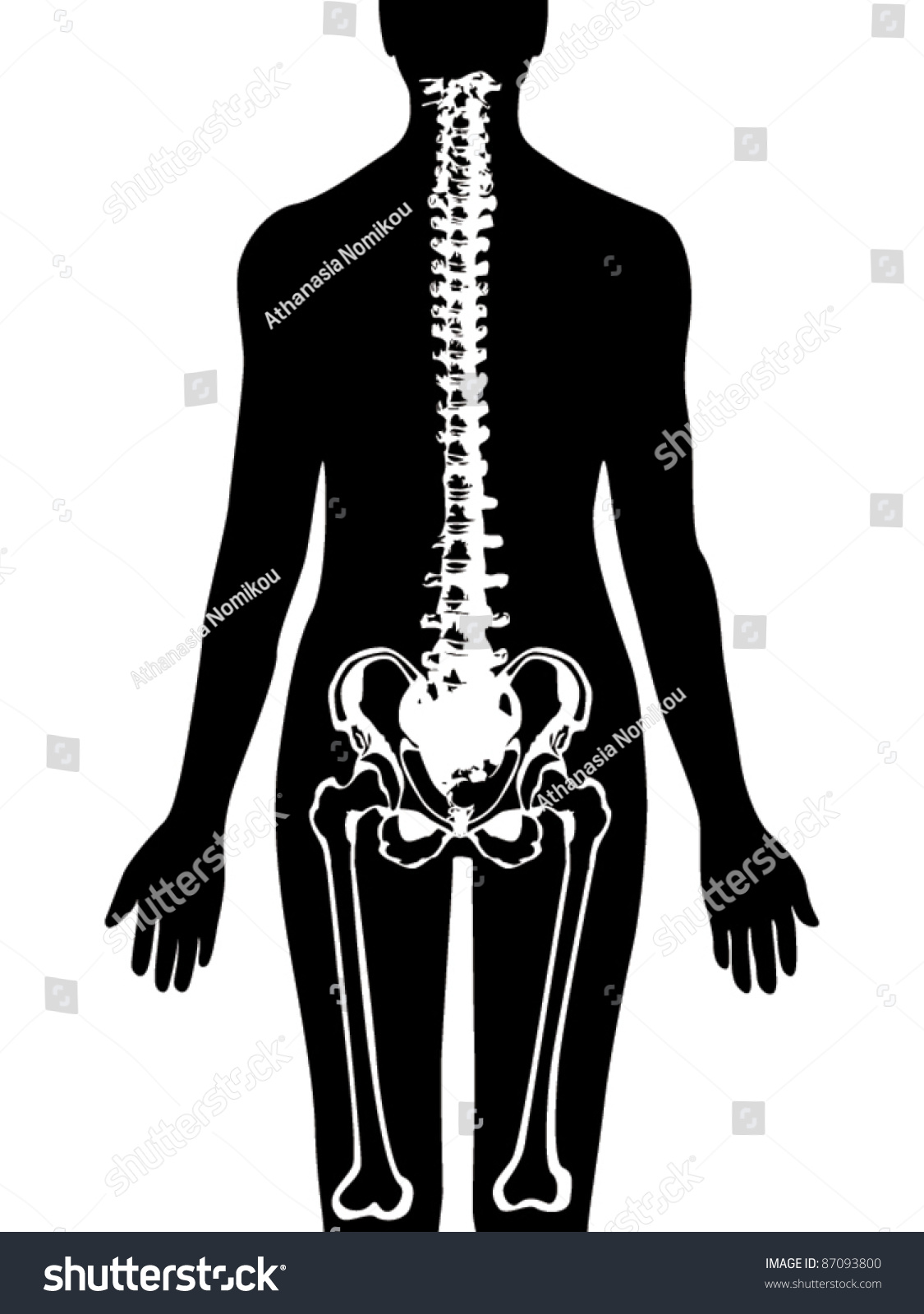 hight resolution of spine pelvis icon vector