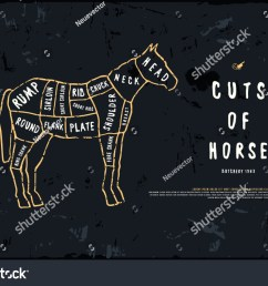 stock vector horse cuts diagram in the style of handmade graphics illustration with rough texture [ 1500 x 1090 Pixel ]