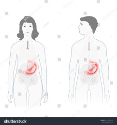 stomach pain male female silhouette highlighted stock vector pain scale diagram female body diagram for pain [ 1500 x 1600 Pixel ]