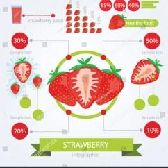 Strawberry Fruit Diagram Fetal Pig Reproductive System Infographics Fruits Vector Illustration Stock