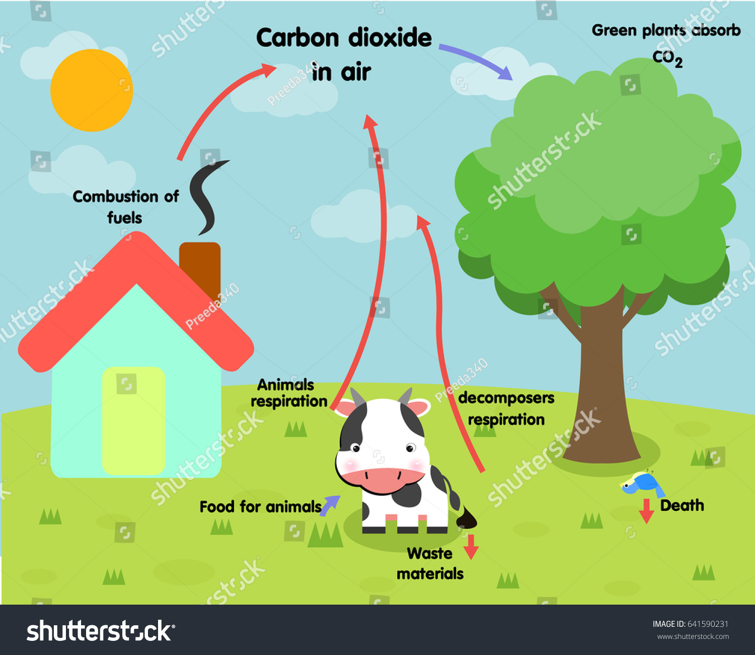 photosynthesis z scheme diagram 99 ford explorer radio wiring carbon cycle stock vector 641590231 shutterstock