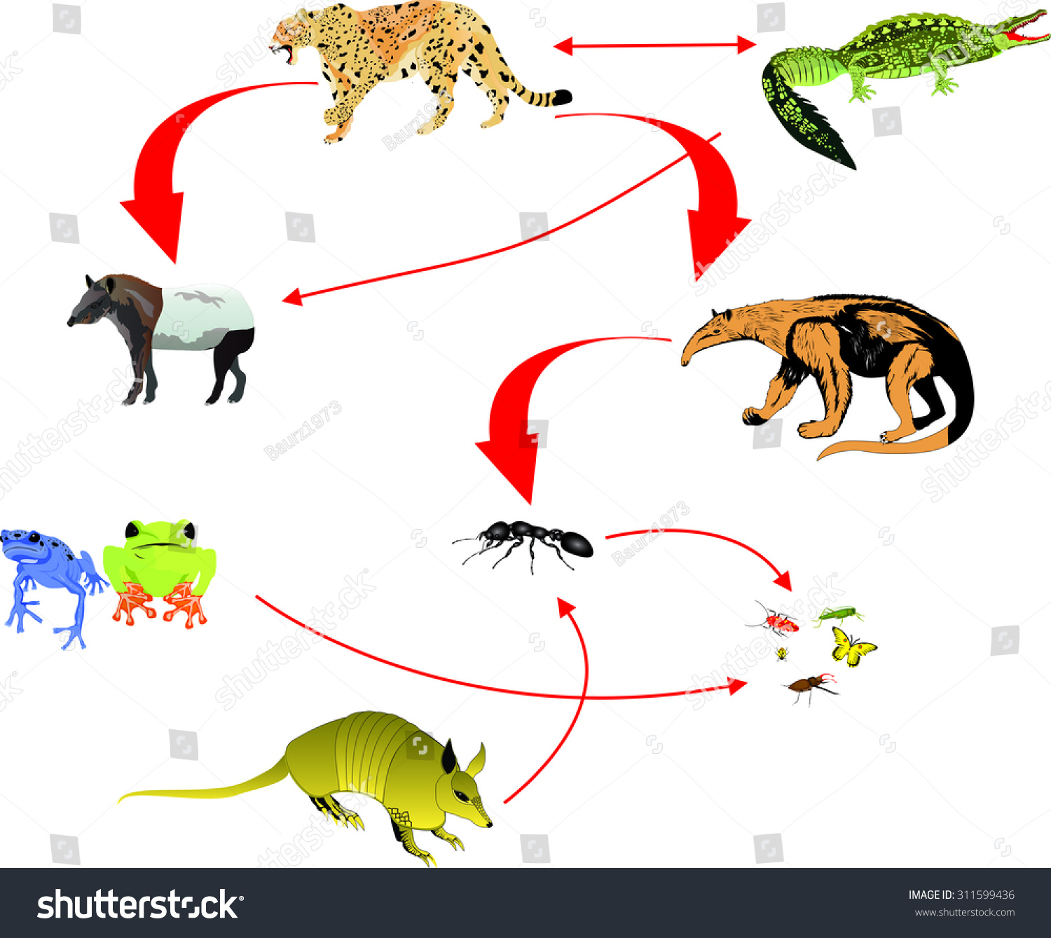 Jaguar Life Cycle For Kids