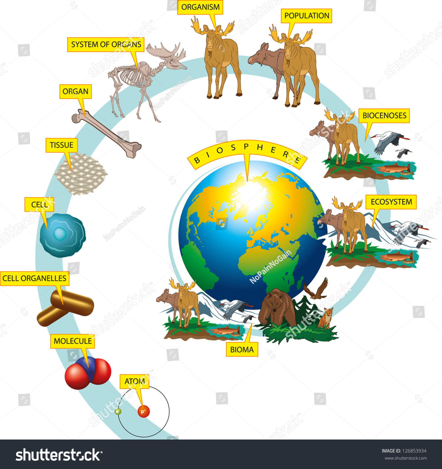 Hierarchy Biological Organization Stock Vector