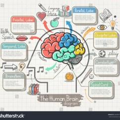 The Human Brain In Photographs And Diagrams Minn Kota Riptide 80 Wiring Diagram Doodles Icons Set Stock Vector