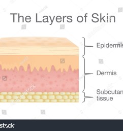 the layer of human skin in vector style and components information illustration about medical and [ 1500 x 1138 Pixel ]