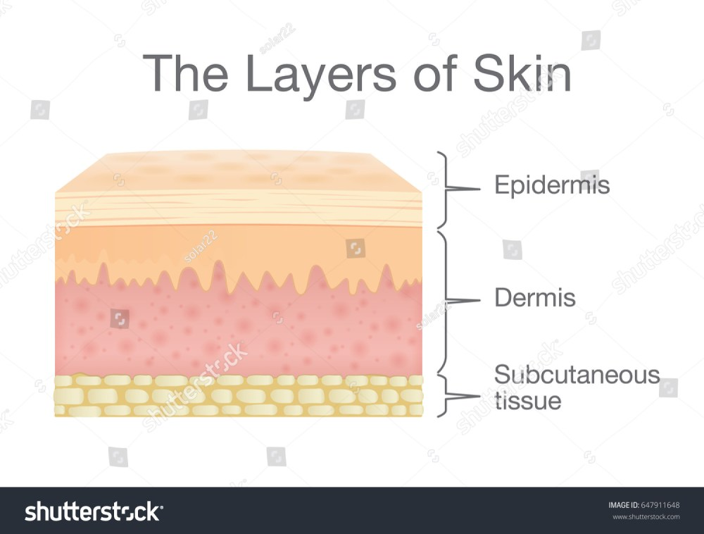 medium resolution of the layer of human skin in vector style and components information illustration about medical and