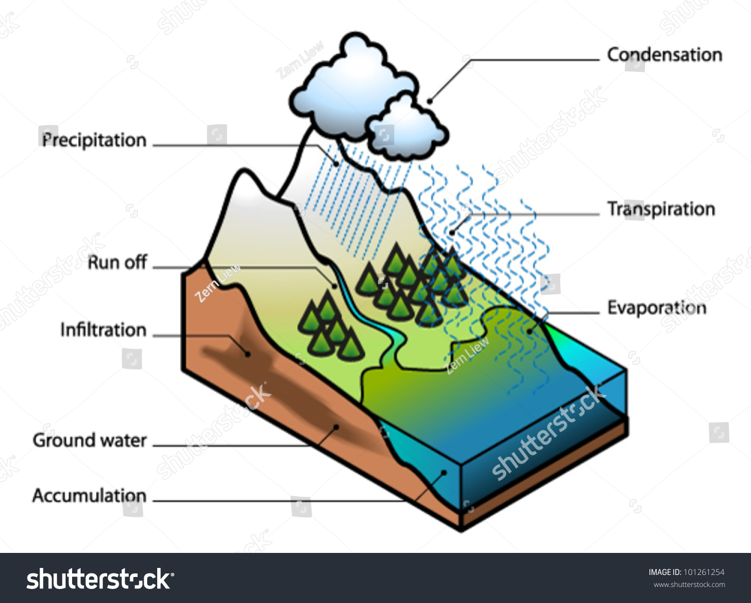 hight resolution of water cycle showing evaporation transpiration condensation