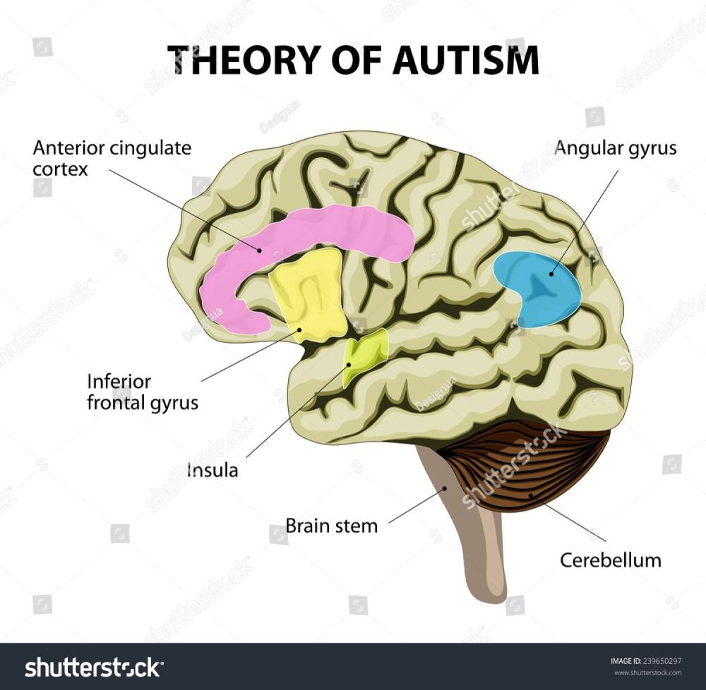 medium resolution of  diagram of adhd brain theory of autism human brain illustration show specific