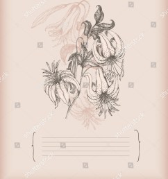 tiger lily drawing stock vector royalty free 50005267 shutterstock diagram of tiger lily [ 1238 x 1600 Pixel ]