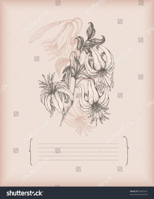 small resolution of tiger lily drawing stock vector royalty free 50005267 shutterstock diagram of tiger lily