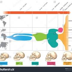 Diagram Of Evolution Timeline Honda Mt50 Wiring Human Stock Vector 353411879 Shutterstock