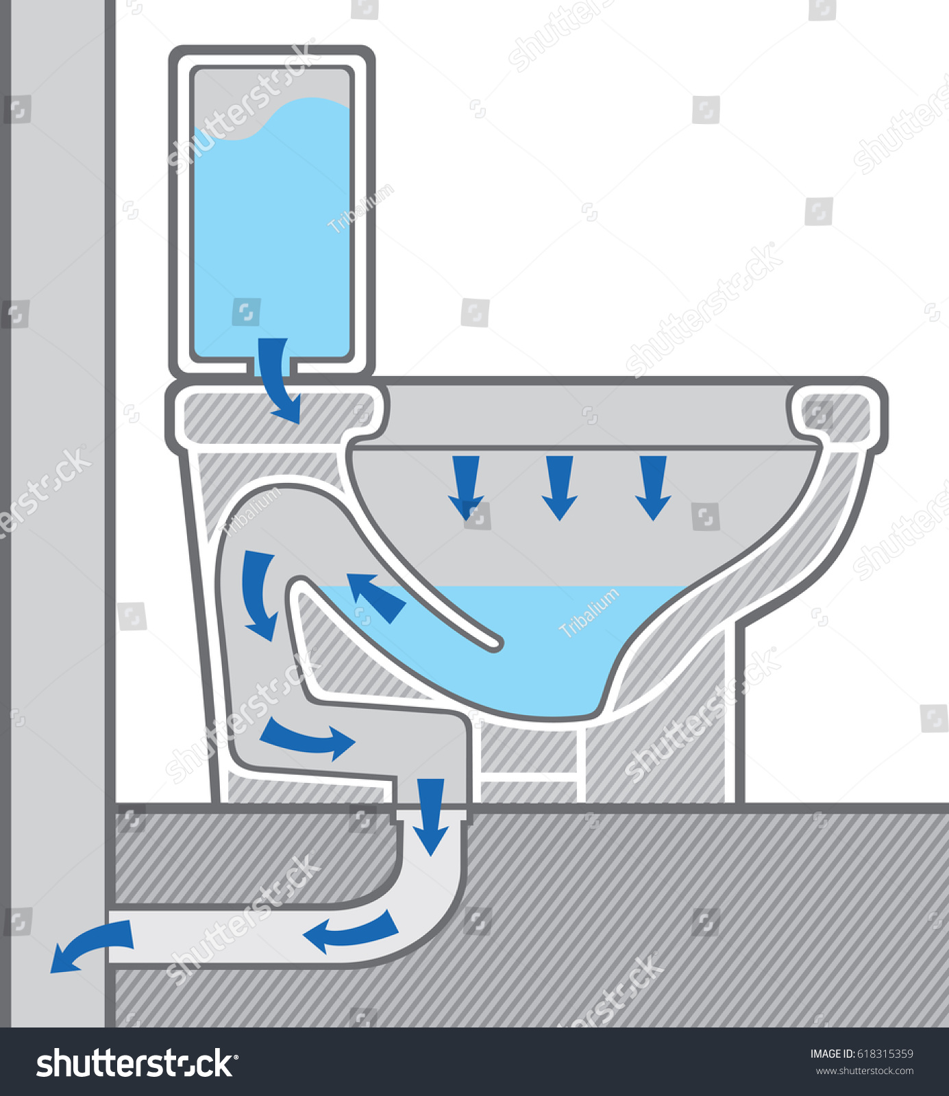 diagram of a toilet flush system razor e100 electric scooter wiring bowl structure cross section stock vector
