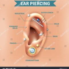 Different Ear Piercings Diagram 1997 Dodge Dakota Tach Wiring Top Types Piercing Trendy Stock Vector