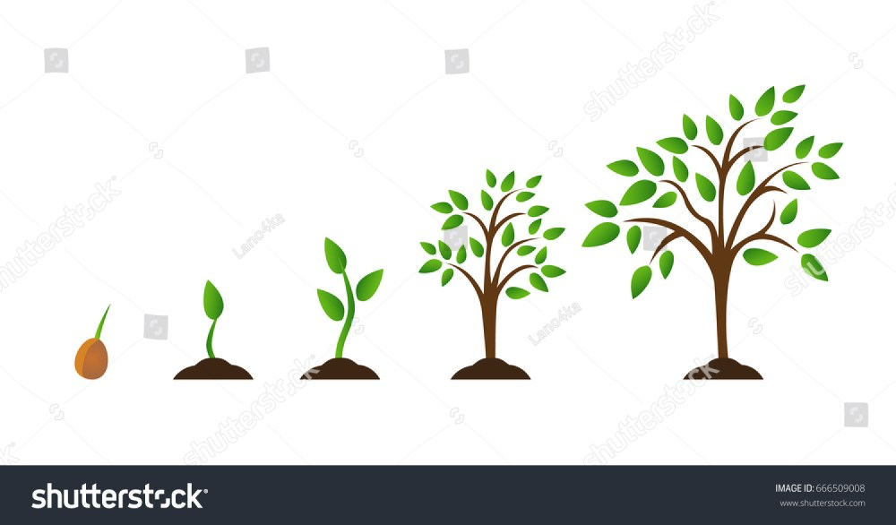 medium resolution of tree growth diagram with green leaf nature plant set of illustrations with phases plant