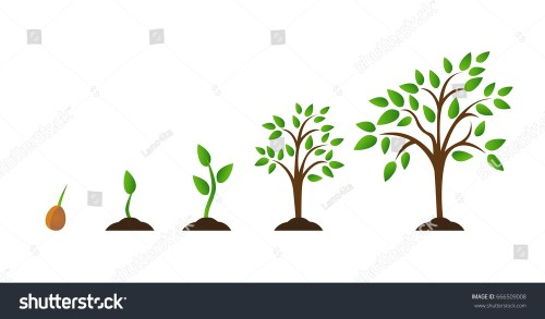 small resolution of tree growth diagram with green leaf nature plant set of illustrations with phases plant