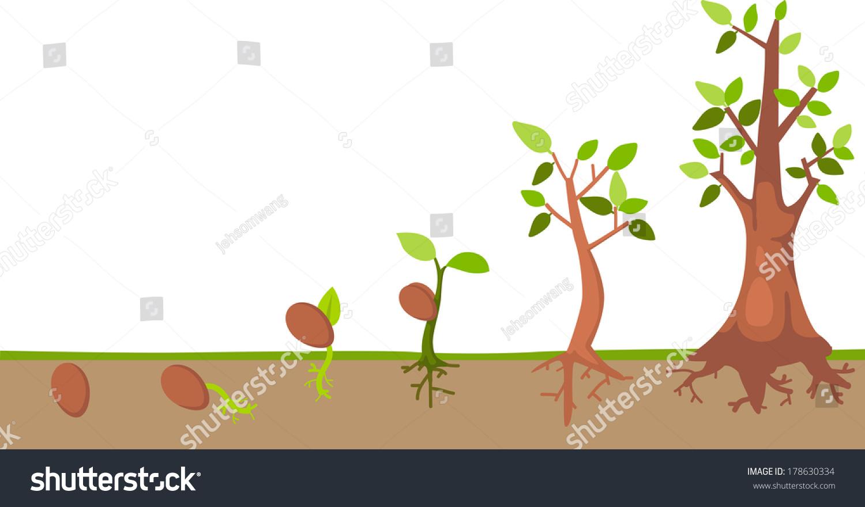 Tree Life Cycle Vector Stock Vector
