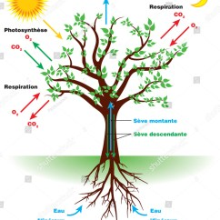 Draw A Diagram Of Photosynthesis Wiring For Home Automation Tree French Stock Vector 745812874