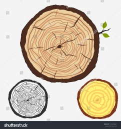 tree trunk crossection cut stump with forest trees wooden cut circular texture wood [ 1500 x 1600 Pixel ]