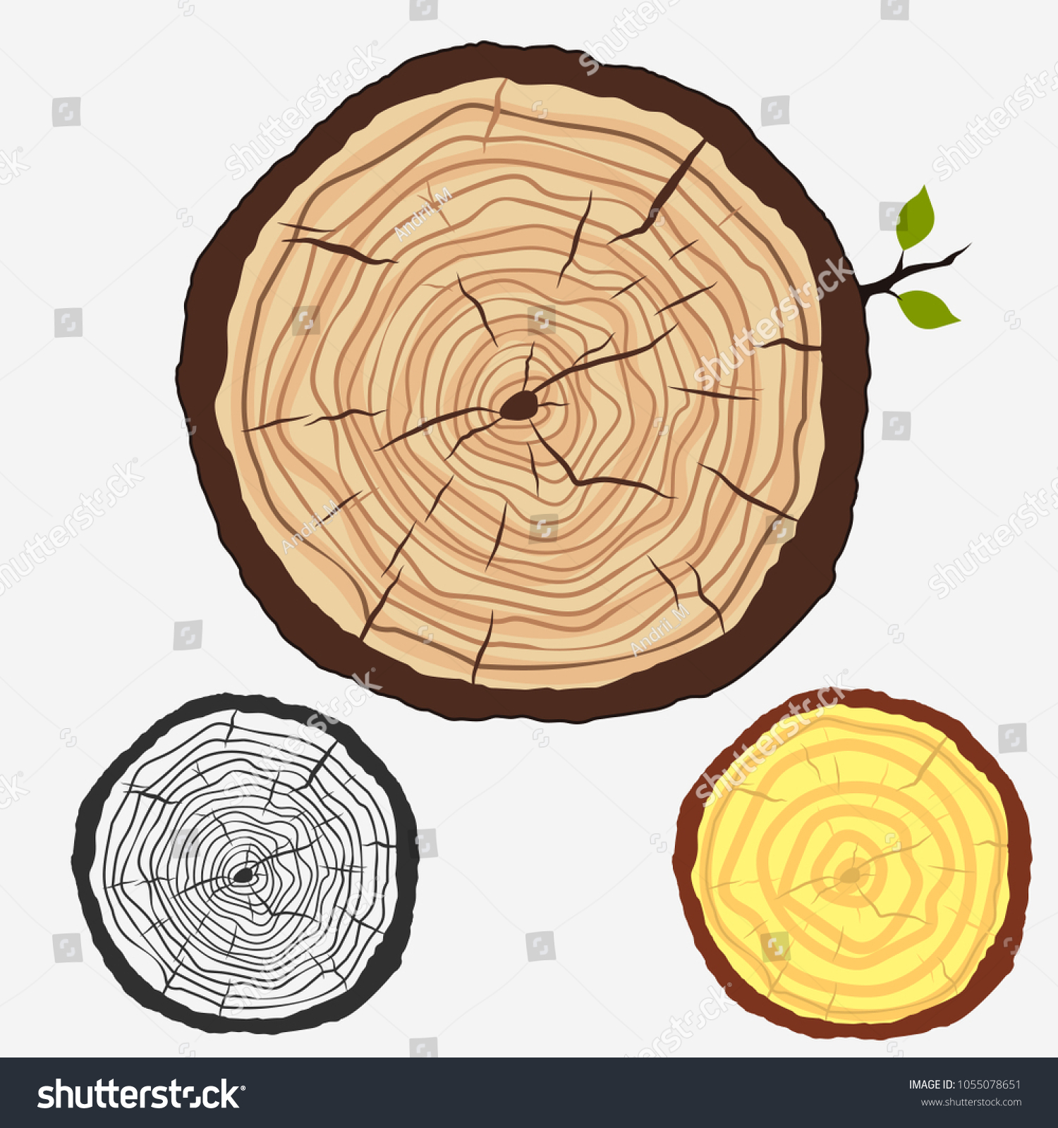 hight resolution of tree trunk crossection cut stump with forest trees wooden cut circular texture wood