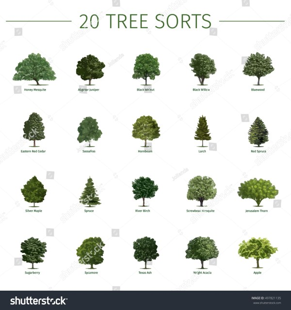 25+ Pine Tree Names For Landscaping Pictures and Ideas on