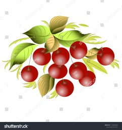 vector clipart cherry a hand drawn image for insertion into a document a [ 1500 x 1600 Pixel ]