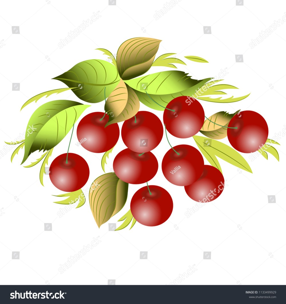 medium resolution of vector clipart cherry a hand drawn image for insertion into a document a