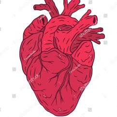 Vintage Red Real Heart Diagram Hand Skeleton Vector Illustration Isolated On Transparent Stock