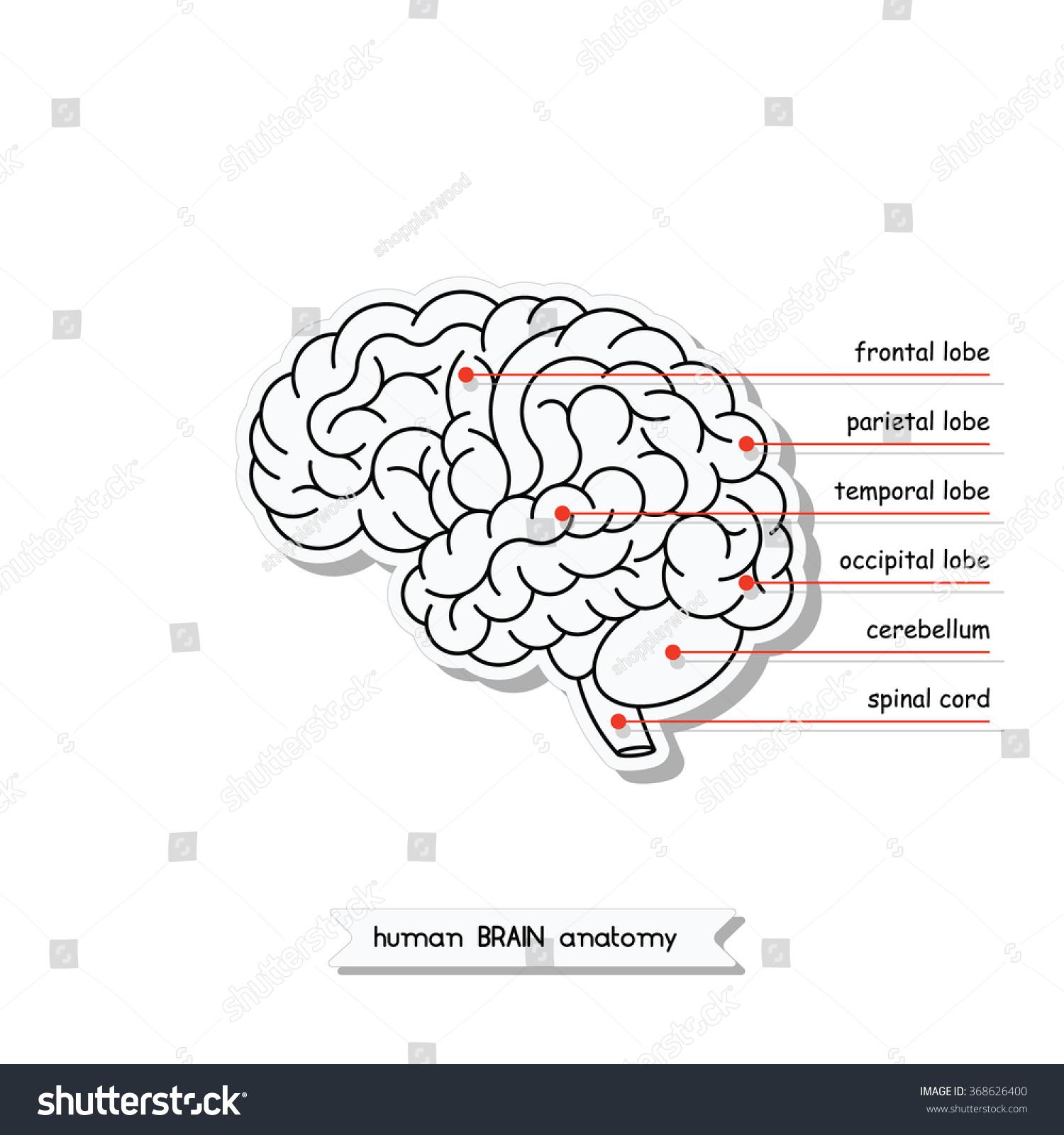 easy brain diagram 1995 acura integra radio wiring x7c lektionenderliebe de c5 schwabenschamanen u2022 rh