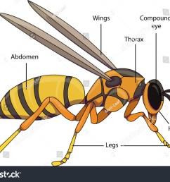 diagram of hornet nest wiring diagram used diagram of hornet [ 1500 x 1137 Pixel ]