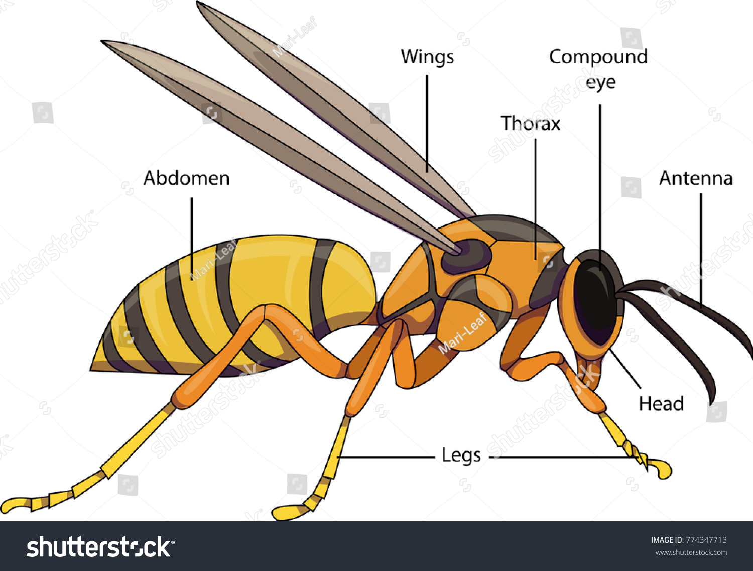 hornet anatomy diagram 1957 chevy truck wiring wasp mouth nice place to get
