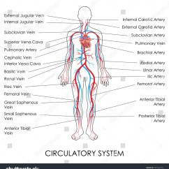 Lymph Circulation Diagram Kitchen Sink Plumbing Diy Vector Wiring Free Engine Image For User