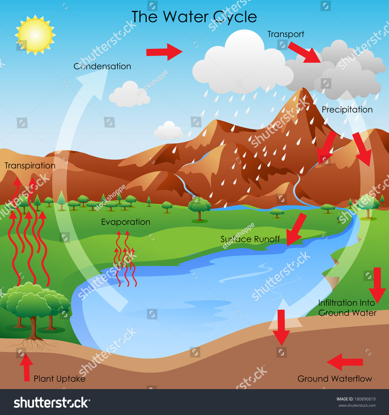 Vector Illustration Diagram Showing Water Cycle Stock