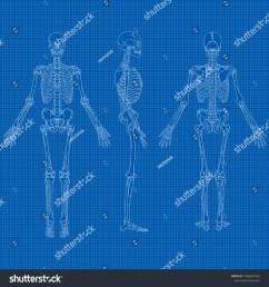 vector illustration of human skeleton drawing  [ 1500 x 1600 Pixel ]