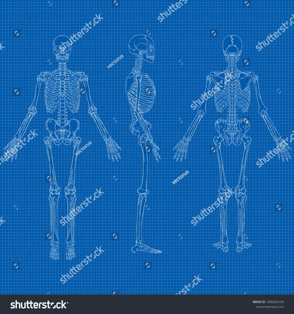 medium resolution of vector illustration of human skeleton drawing