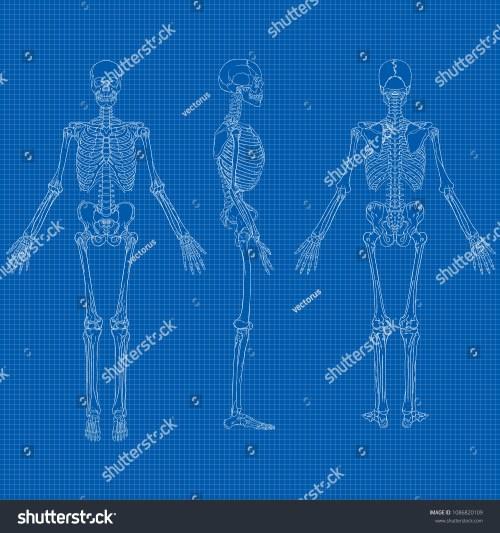 small resolution of vector illustration of human skeleton drawing