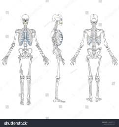 vector illustration of human skeleton vector drawing  [ 1500 x 1600 Pixel ]