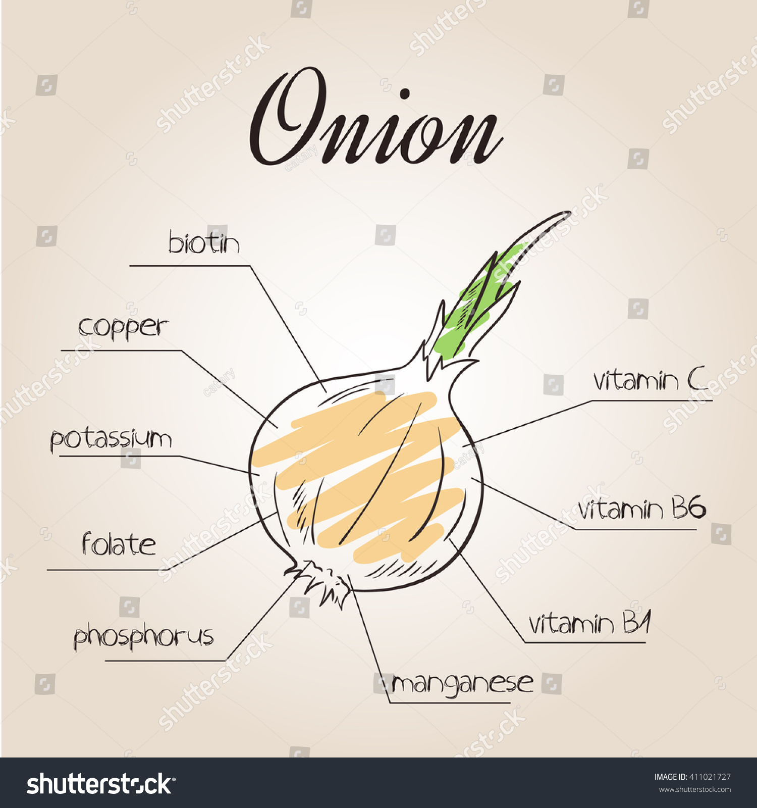 Vector Illustration Nutrients List Onion Stock Vector