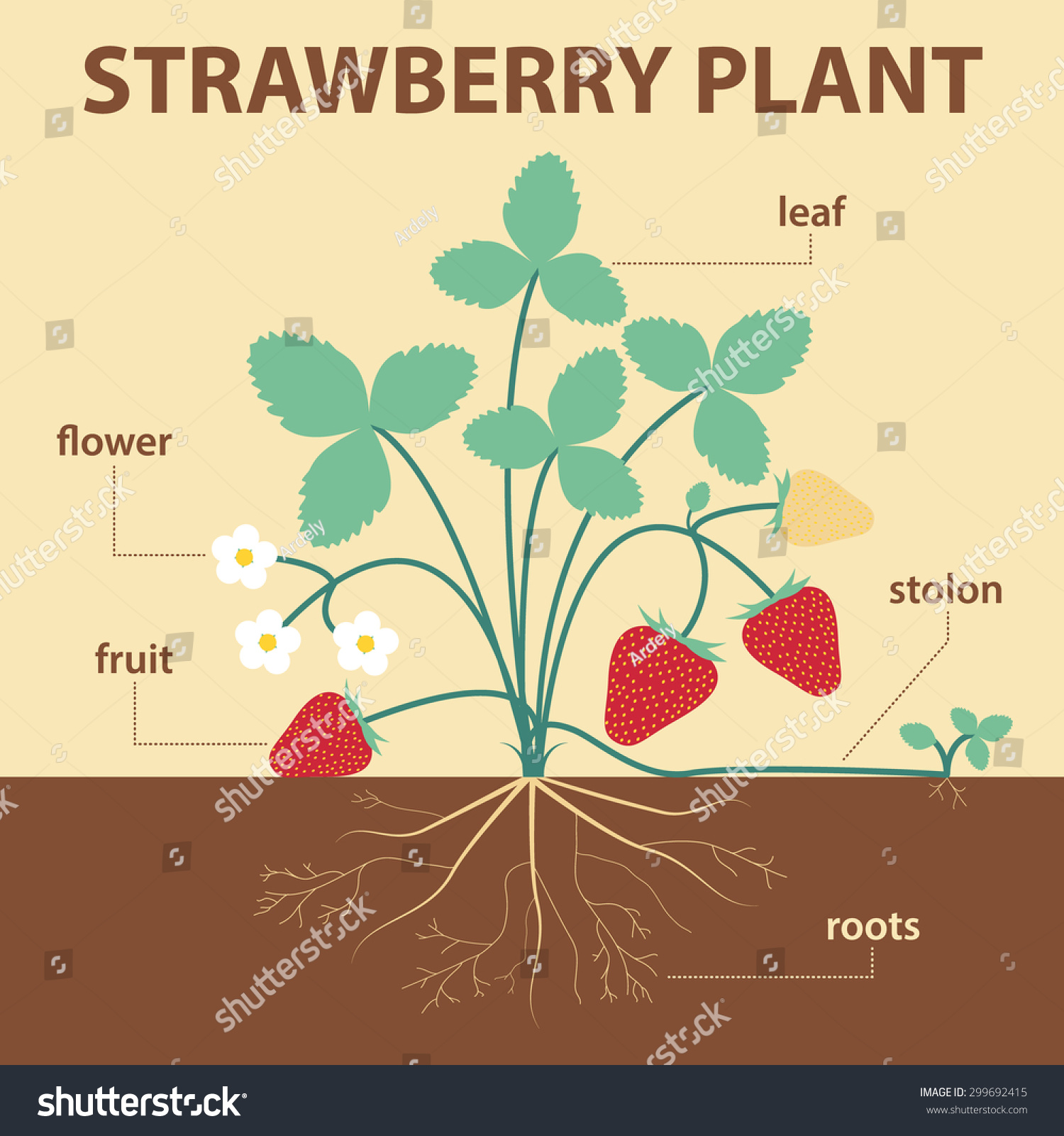 strawberry fruit diagram how to create a network vector illustration showing parts of whole