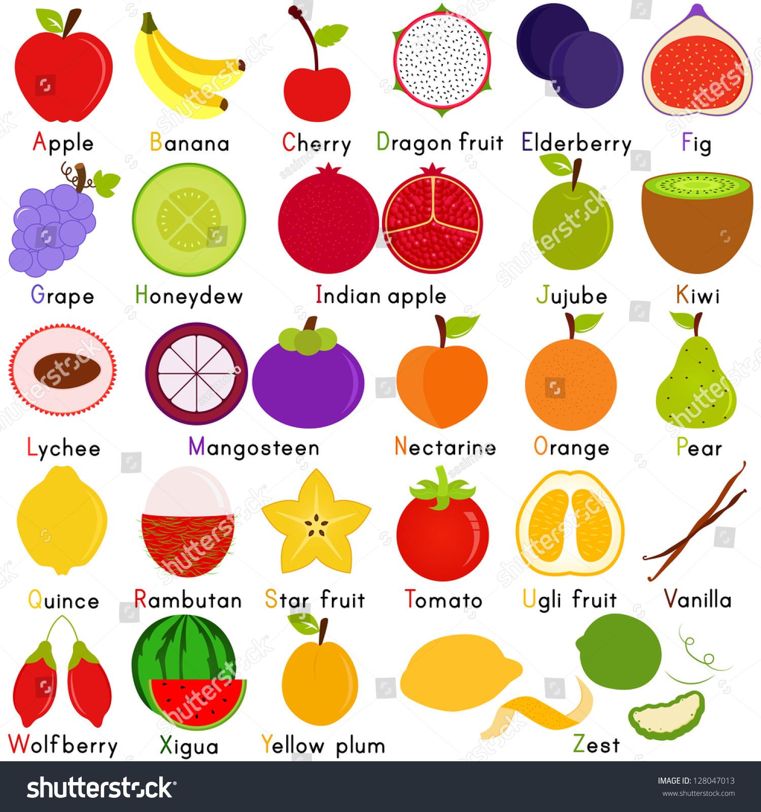 Vector Fruit Representing Alphabet Z Dictionary Stock