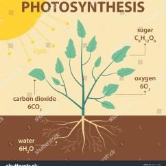 Photosynthesis Z Scheme Diagram 2010 Troy Bilt Bronco Wiring Vector Schematic Illustration Showing Plant