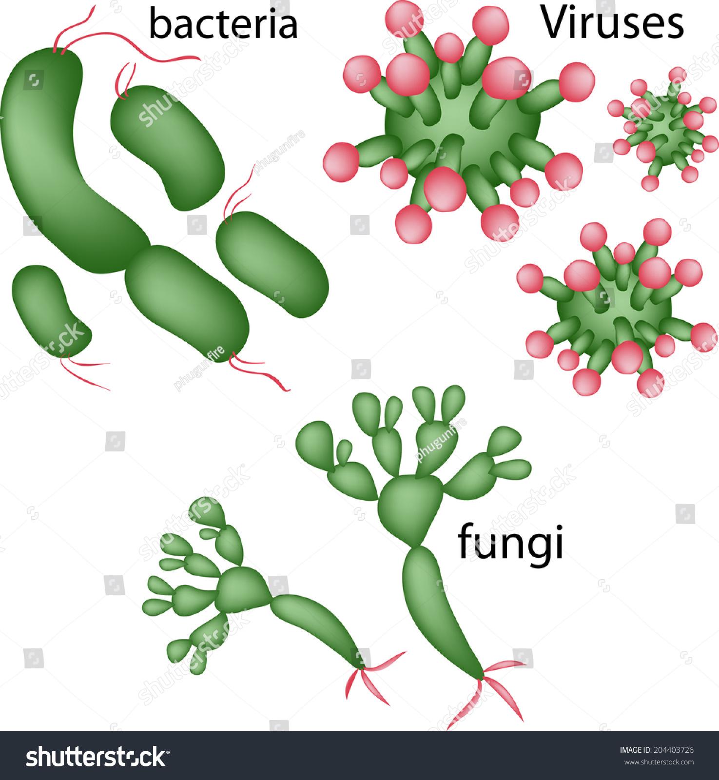 Viruses Bacteria Fungi Vector Stock Vector