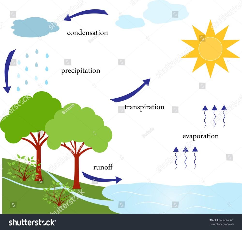 medium resolution of water cycle