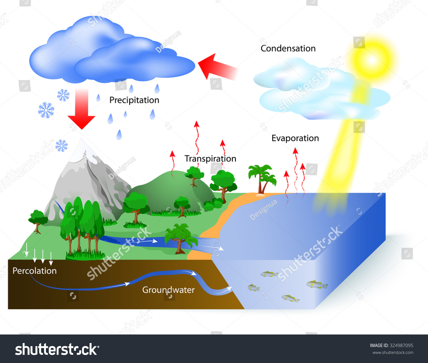 picture of water cycle diagram cd player wiring sun which drives stock vector